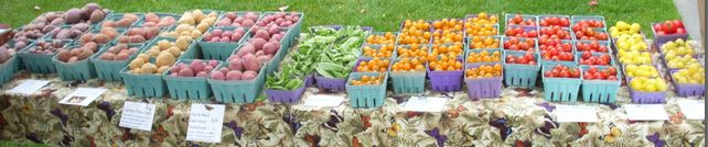 Some of the vegetables we grew and sold.