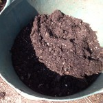 my compost